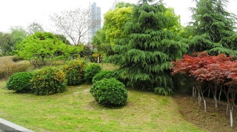 攀缘植物的选择   利用攀缘植物装饰建筑物的一种绿化形式。攀缘绿化除美化环境外,还有增加叶面积和绿视率、阻挡日晒、降低气温、吸附尘埃等改善环境质量的作用。用途多样。攀缘绿化是攀缘植物攀附在建筑物上的一种装饰艺术,绿化的形式能随建筑物的形体而变化。用攀缘植物可以绿化墙面、阳台和屋顶,装饰灯柱、栏栅、亭、廊、花架和出入口等,还能遮蔽景观不佳的建筑物。  占地很少。攀缘植物因依附建筑物生长,占地很少。在人口多、建筑密度大、绿化用地不足的城市,尤能显示出攀缘绿化的优越性。  繁殖容易。攀缘植物繁殖方便,生长快,费